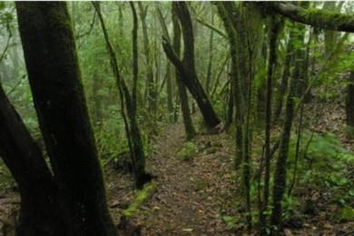Niedrigen Schwierigkeit Weg in dem südlichen Bereich des Garajonay Nationalpark